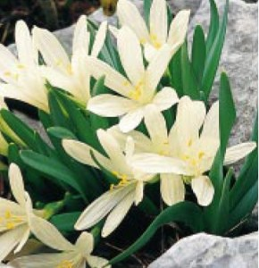 fethiye flora